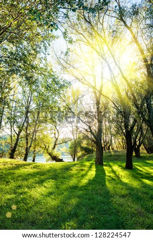 Sunny landscape with forest and river - stock photo