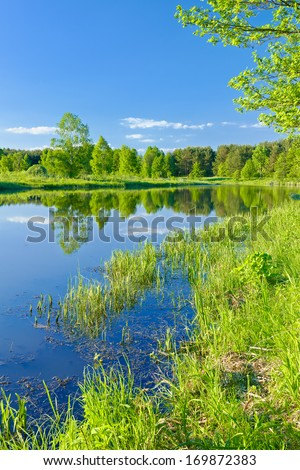 Sunny landscape with The Narew braided river and green trees. Mazovia, Poland. - stock photo