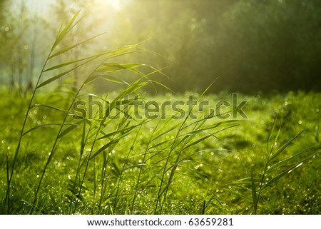 Sunny lawn - stock photo