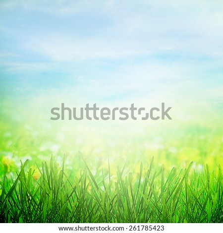 Sunny meadow in sunlight in spring - stock photo