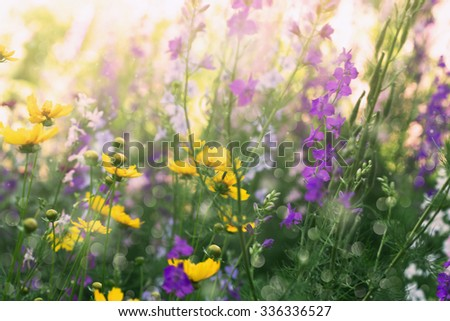 sunny meadow with beautiful blooming flowers - stock photo