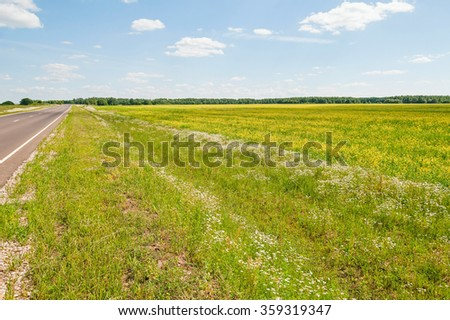 Sunny meadow with blossom carpet of ox-eye daisy and rapeseed flowers along straight highway before forest against blue sky background. Kaluzhsky region, Russia.  - stock photo