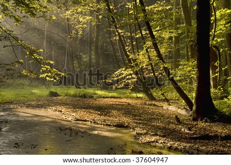 Sunny morning in the woods near the creek - stock photo