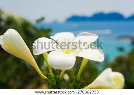 Sunny Petals Idyllic Blossom  - stock photo