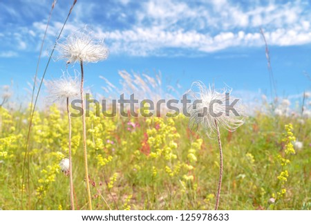 sunny picture of wildflowers - stock photo