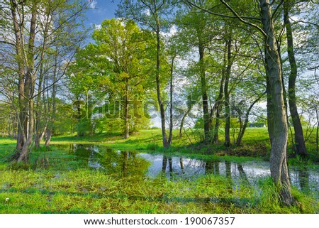 Sunny spring landscape. Trees in the swamp. Flood waters of The Narew River, Poland. - stock photo