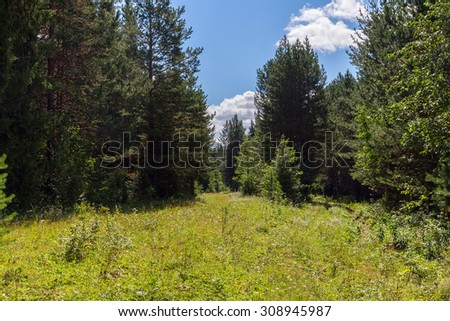 Sunny summer day in the woods - stock photo
