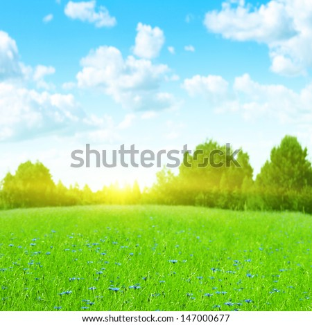 Sunny summer landscape. - stock photo