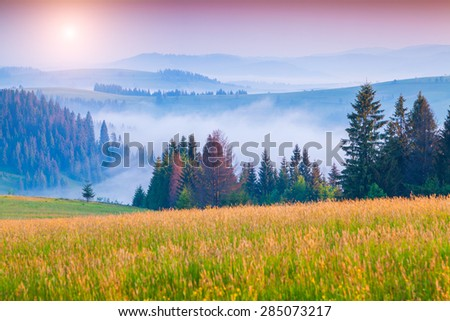 Sunny summer morning in the foggy Carpathian mountains. Borzhava ridge, Transcarpathian, Ukraine, Europe. - stock photo