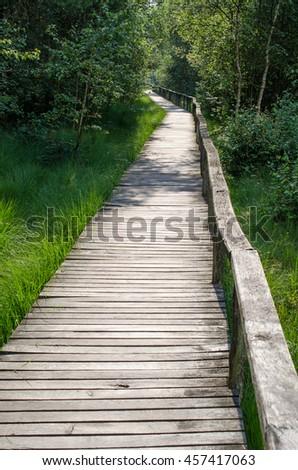 sunny track leading to moor (Germany) - stock photo