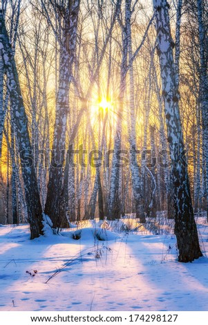 Sunny winter landscape. - stock photo