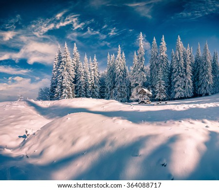 Sunny winter scene in the mountain forest after heavy snowfall. Carpathian region, Ukraine, Europe. - stock photo