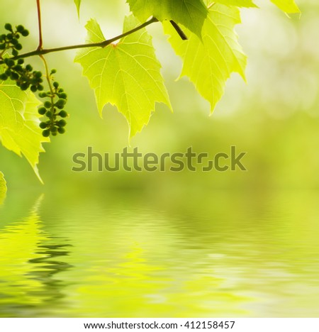 Sunny young green vine spring  leaves, natural eco background with water reflection - stock photo