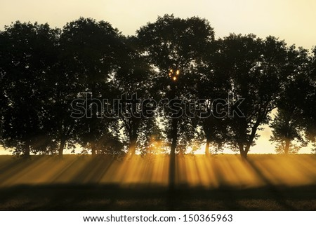 sunrays behind tree-lined, Burgundy, France - stock photo