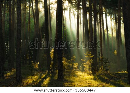 sunrays in a forest in the Harz Mountains of Germany - stock photo