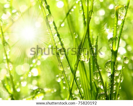 Sunrise and fresh dewy grass. Sunny day concept. - stock photo