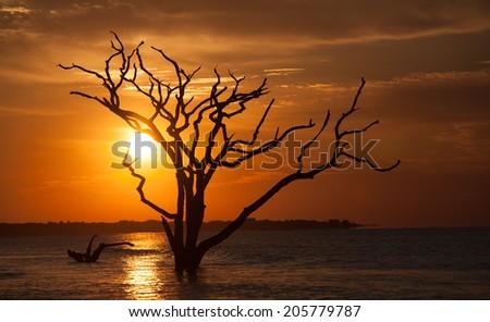 sunrise at botany bay - stock photo