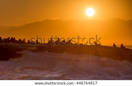 Sunrise at Seal Island, False Bay, South Africa - stock photo