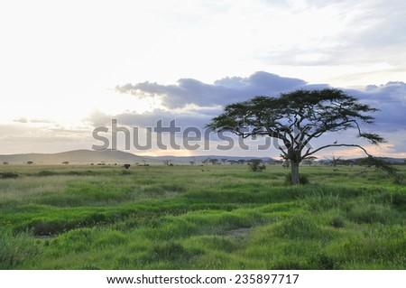 Sunrise at Serengeti National Park, Tanzania, East-Africa. - stock photo