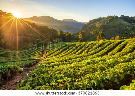 Sunrise at strawberry field terrace at doi angkang , chiang mai , Thailand. - stock photo