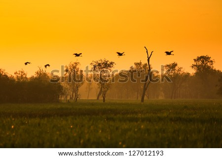 Sunrise at yellow waters in the wetland of Kakadu National Park, - stock photo
