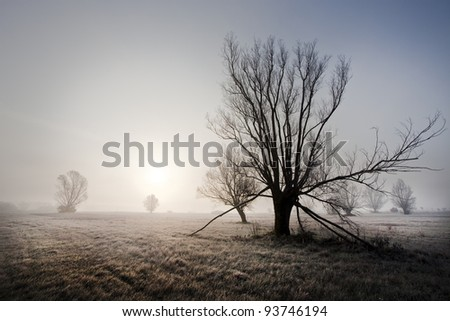Sunrise behind lonely trees in an open field - stock photo
