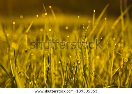 Sunrise dew - stock photo