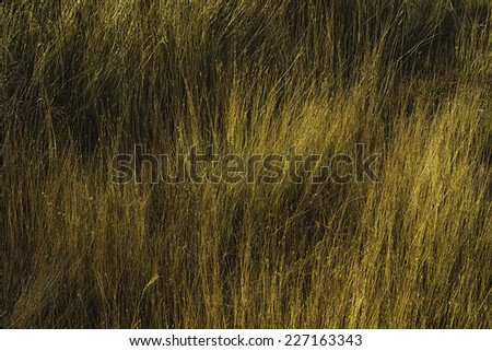 Sunrise hits closeup of grass in a rural area - stock photo