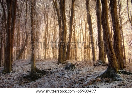 sunrise in a beautiful forest with frozen trees in winter - stock photo
