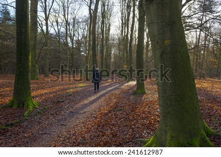 Sunrise in a beech forest in winter - stock photo