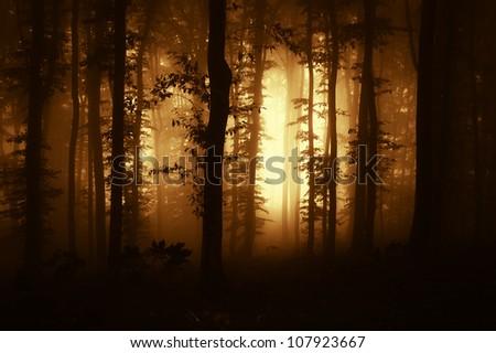 sunrise in a dark forest - stock photo