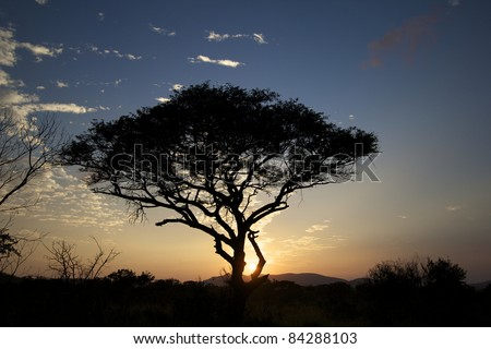 sunrise in a game reserve - stock photo