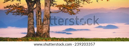 Sunrise in a misty valley with lonely oak tree on a hill - stock photo