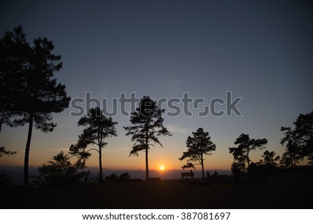 sunrise in a pine tree forest in thailand - stock photo