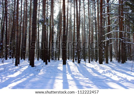 Sunrise in a winter forest. - stock photo