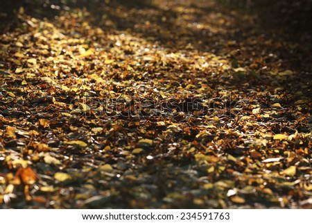 Sunrise in autumn forest . Fallen leaves in autumn forest, shallow dof.  - stock photo