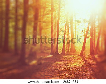 Sunrise in autumn forest. Tilt-shift lens - stock photo