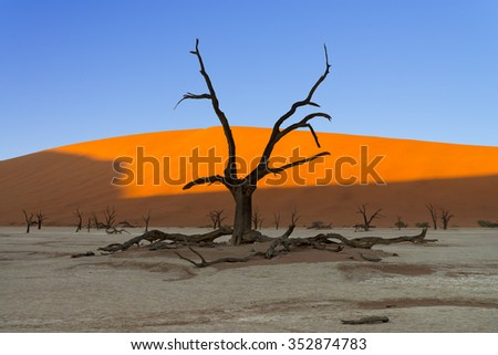 Sunrise in Deadvlei illuminating half the red sand dunes while the ground and the scorched dead trees are still in the shadows in Sossusvlei, Namibia - stock photo