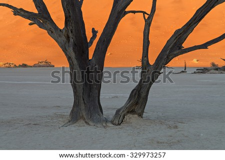 Sunrise in Deadvlei illuminating the red sand dunes while the floor and the scorched dead trees are still in the shadows in Sossusvlei, Namibia - stock photo