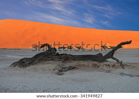 Sunrise in Deadvlei illuminating the red sand dunes while the ground and the scorched dead trees are still in the shadows in Sossusvlei, Namibia - stock photo