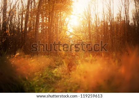 Sunrise in mystical autumn forest. Small dept of field. - stock photo