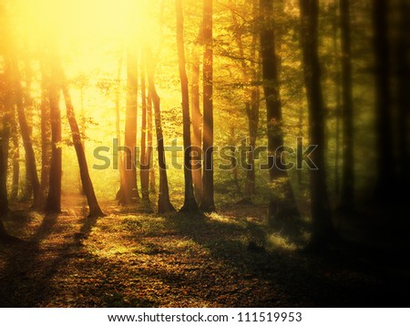 Sunrise in mystical autumn forest. Tilt-shift view. - stock photo