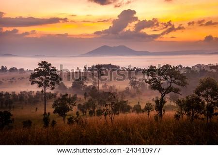sunrise in savanah meadow - stock photo