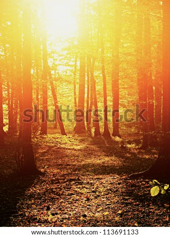 Sunrise in summer forest - stock photo
