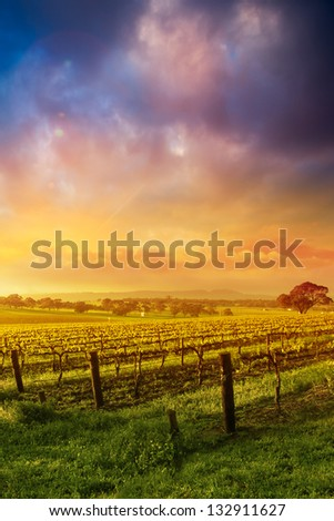 Sunrise in the Barossa Valley - stock photo
