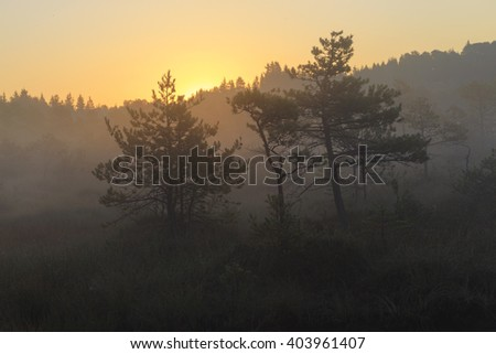 Sunrise in the bog, marsh - stock photo