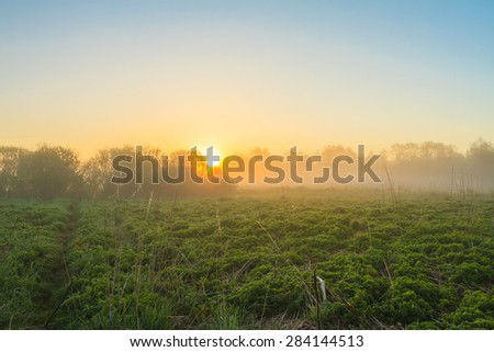 Sunrise in the field at the river with fog. The rays of dawn sunlight illuminate the clearing with wildflowers and grass. Dawn at the river. Web in dew in the morning. Bright fine sunrise on the river - stock photo