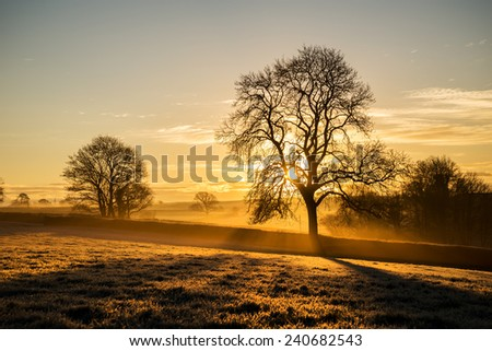 Sunrise in the fields at pengover green, cornwall, uk with beautiful tree silhouette - stock photo