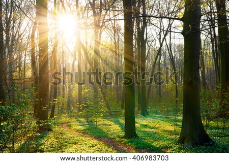 Sunrise in the forest with beautiful sunbeams - stock photo
