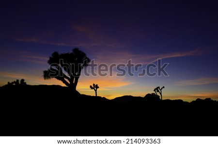 Sunrise in the Joshua Tree National Park, Southern California - stock photo